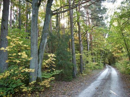 3 aneinander grenzende Waldgrundstücke