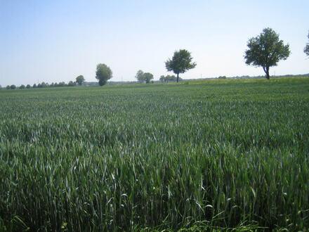 diverse Ackerflächen bei Schabringen - alle Grundstücke auch einzeln erwerbbar! -