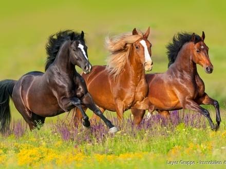 Pferde Beispielfoto