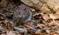 Aus die Maus: Wie Sie Nager aus der Wohnung vertreiben
