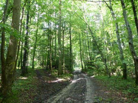 Waldfläche in der Nähe von Aschau am Inn