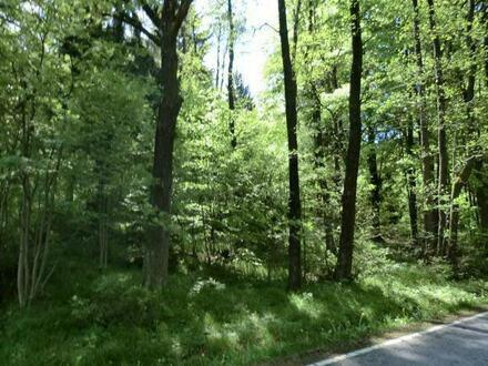 Waldgrundstück bei Furth im Wald Richtung Schwarzenberg
