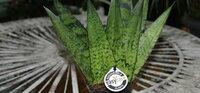 Pflanzen für Gieß-Muffel