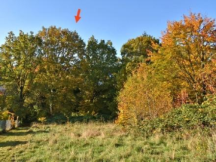 Bevorzugte Waldrandlage! Unbebautes Grundstück in gewachsener Anwohnerlage