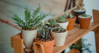 Fünf Pflanzentipps für Anfänger