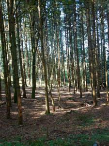 Waldfläche Nähe Töging am Inn