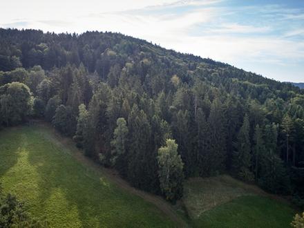 Waldgrundstück mit atemberaubendem Blick in den Bayerischen Wald