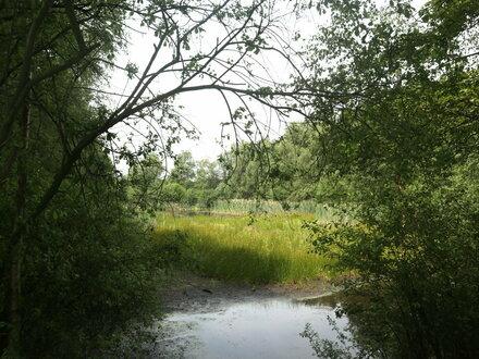 Biotopsfläche für Naturliebhaber
