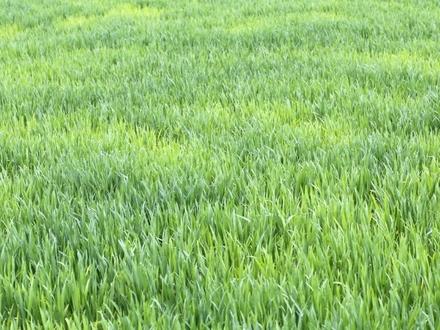 ***Landwirtschaftlicher Grund in Aicha vorm Wald***