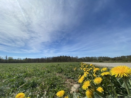 Neubau: Herrliche 4,5 Zi.-Garten-Whg. direkt am Naturschutzgebiet in Trudering