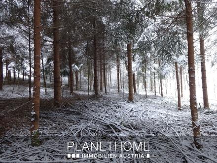 5 Hektar arondierte Waldfläche!