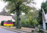 Rutsweiler am Glan liegt zwischen Aue, Wald und Potzberg