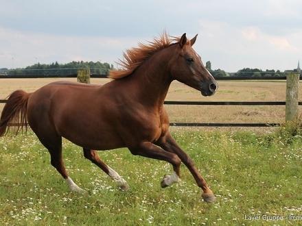 Traumgundstück für Pferdehaltung mit Scheune und Baugenehmigung