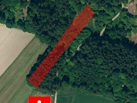 Wald Gemarkung Kienberg zu verkaufen!