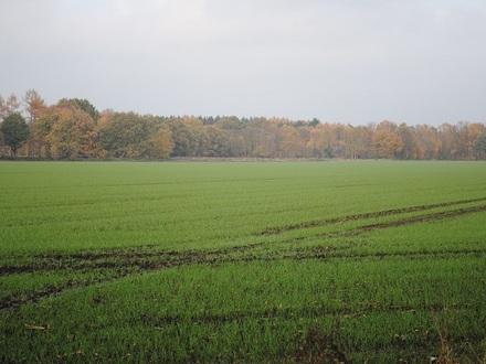 GEGEN GEBOT - ca. 3,18 ha Ackerland in Sögel!