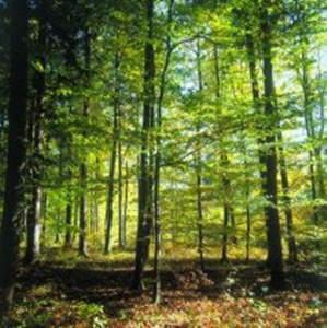 Schönes Waldgrundstück bei Waldkirchen