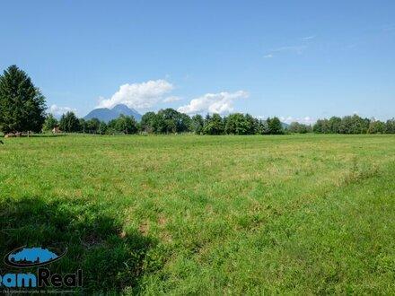 SPARBUCH mit Weitblick - Grünlandgrundstück Sbg.-Moos