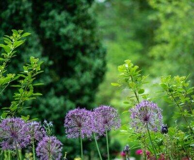 Gartenwohnung vom Feinsten! Zentral gelegen und doch Ruhelage! Provisionsfrei!