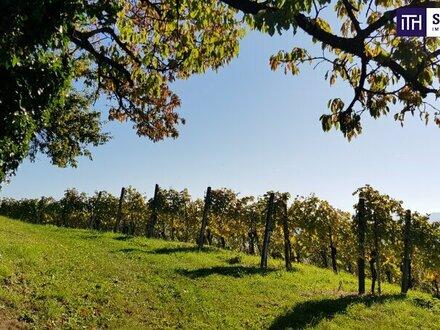 ITH - Weingut vom Feinsten mit fertigem Keller für Wohnhaus!