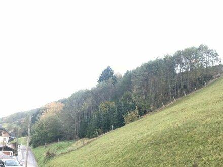 Kleines Waldgrundstück für Naturliebhaber