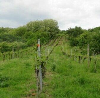 2062 Seefeld-Kadolz: Weingärten mit Presshaus