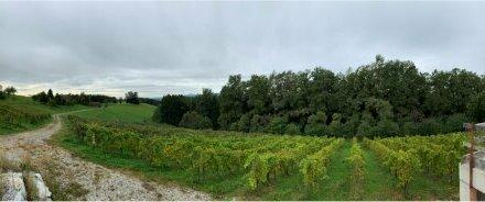 Ankommen und wohlfühlen! Landwirtschaft mit Weingarten Wald und Bauland mit ausgeführten Keller zu verkaufen!