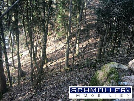 Machen Sie Ihr Angebot! Hang-Waldgrundstück zu verkaufen