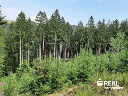 Forstfläche südliches Waldviertel