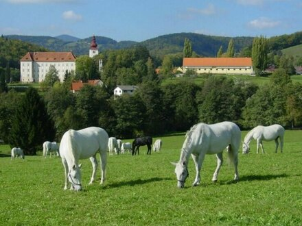 Wohnung im zur Spanischen Hofreitschule gehörenden Schloss Piber
