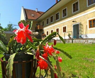 Stylisches Büro in Linzer Gutshof