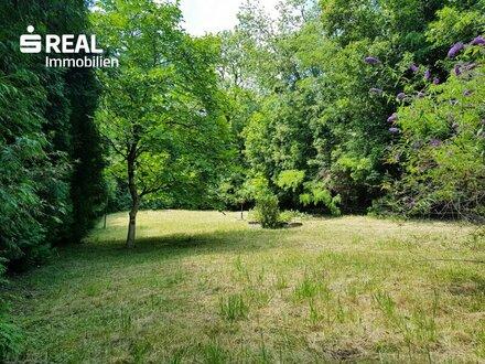 Hinterbrühl – Grundstück eingebettet in Altbaumbestand!