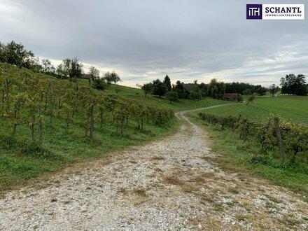 ITH: Ankommen und wohlfühlen! Landwirtschaft mit Weingarten Wald und Bauland mit ausgeführten Keller zu verkaufen!