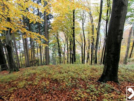 Rarität - Wald samt eigener Quelle in Salzburg Stadt