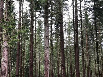 Wald in Unternberg