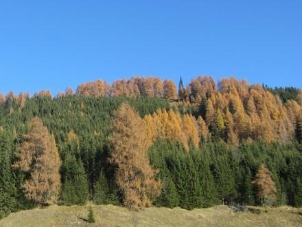 Waldfläche in der Nähe von Tamsweg