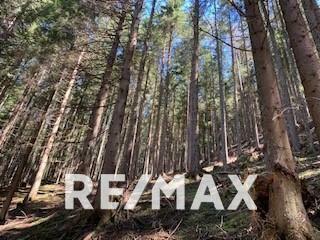 Waldgrundstück als Wertanlage
