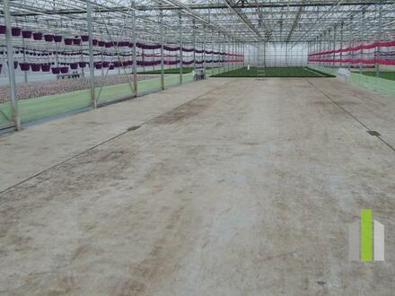 Gärtnerei - Glashaus mit Aussenfläche zu vermieten