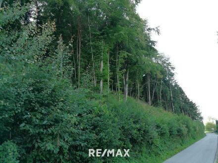 Waldstreifen - gut erreichbar an der Strasse