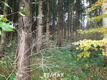 ***NEUER PREIS***Waldgrundstück zwischen Andorf und Sigharting