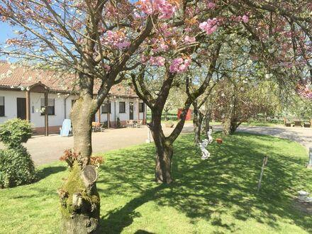 Erholung und Natur pur in einer charmanten Wohnung auf dem Reiterhof in Merzig | Relaxation and pure nature in a charming…