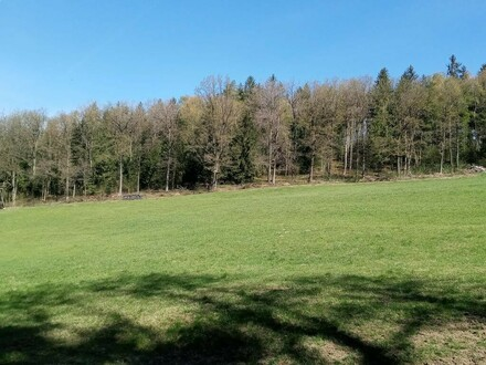 Waldgrund mit Wiese