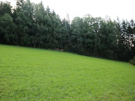Wald- und Wiesengrund