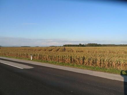 Ebenes, landwirtschaftliches Ackerland