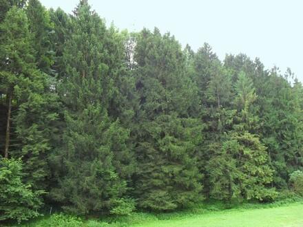 6,5 ha Wald mit ca. 50-jährigen Baumbestand