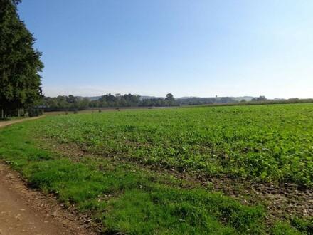Landwirtschaftliche Nutzgrundflächen