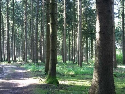 Waldgrund