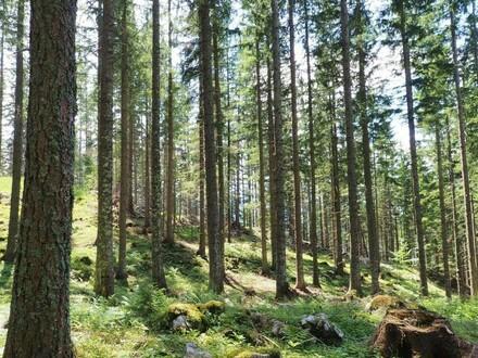 32 ha Wirtschaftswald in der Steiermark