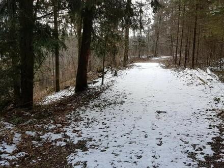 Waldflächen in der KG Lungendorf