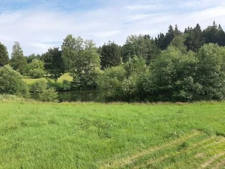 Wald- Wiese- halber Teich