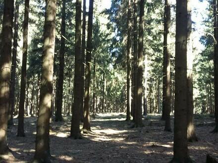 Waldfläche in Engelhartszell